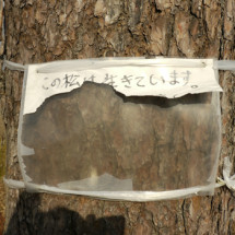 陸前高田市 一本松 201112-07