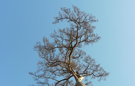 陸前高田市 一本松 201112-09