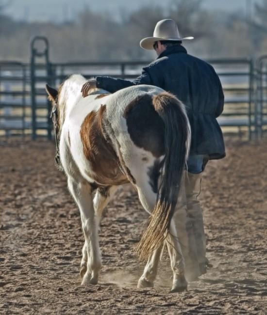 馬に添うてみよ。乗ってみよ